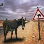 Donkey lost on the road